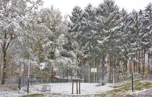 Arena-Winter