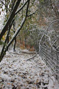 Wald-Winter 1