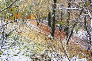 Wald-Winter-2