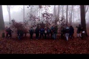 Herbstwerk 1